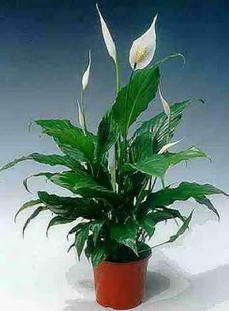 Цветок который называется женское